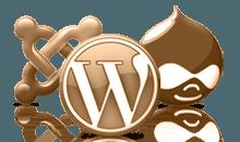 разработка и продвижение сайтов, интернет магазинов на таких cms